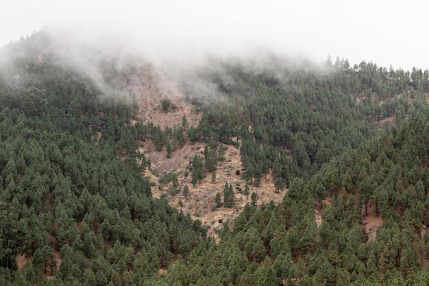Bosque que crece en la costa de montaña