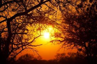 Bosque de la salida del sol