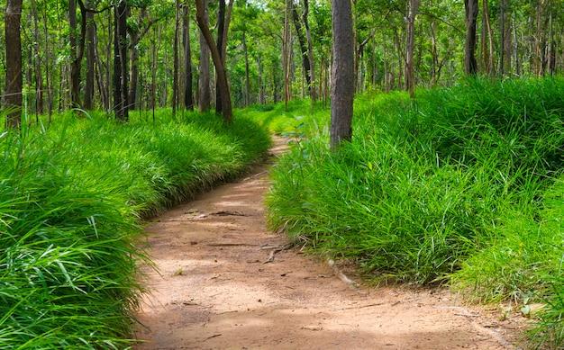 Bosque seco de dipterocarp, campo natural de tailandia