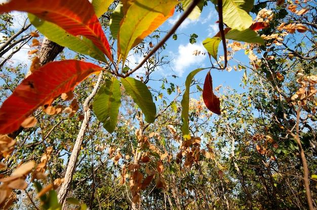 Bosque seco de tailandia