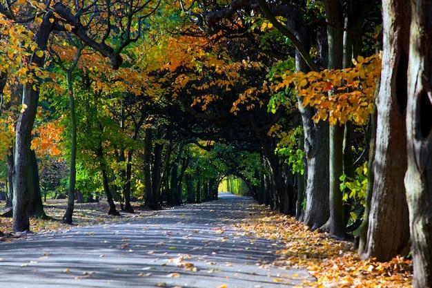 Bosque separado por una carretera