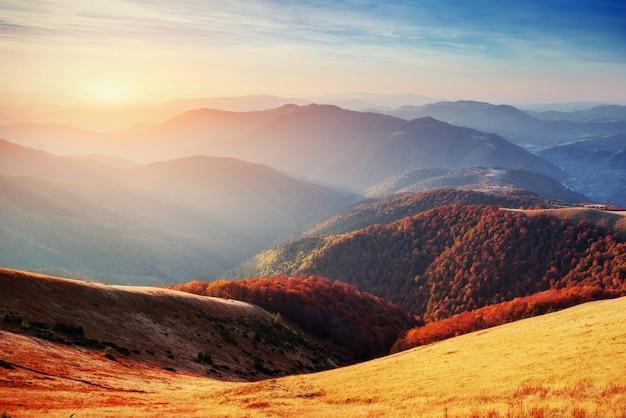 Bosque en la tarde soleada mientras que la temporada de otoño. los cárpatos
