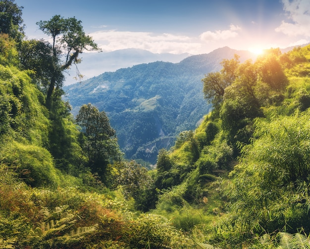 Bosque tropical con árboles verdes en la montaña al atardecer en verano