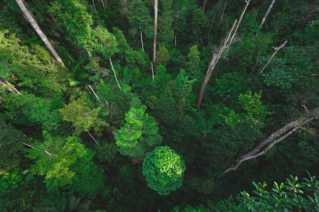 Bosque tropical, escena natural con dosel de árboles en la naturaleza