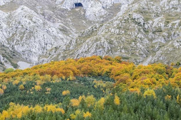 Bosque verde y amarillo frente a las montañas