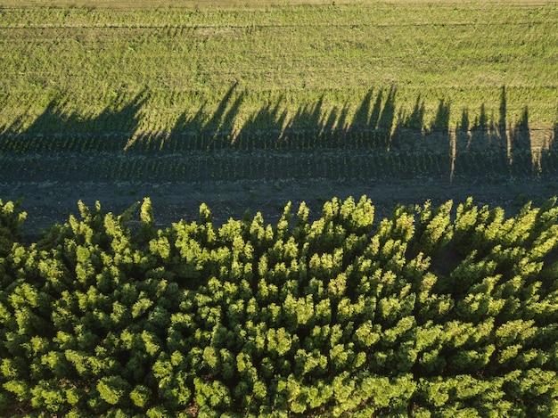 Bosque de vista aérea y campo verde, reflejo de sombras en el campo verde