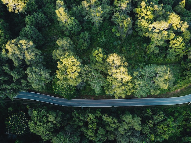 Bosques, árboles y caminos verdes en el campo de la tarde desde arriba.