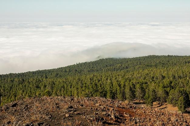 Bosques de montaña con hermosas nubes