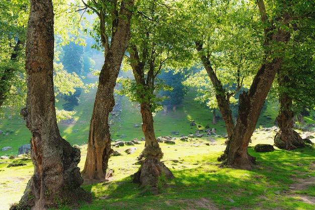 Bosques naturales con luz solar brillante en la mañana
