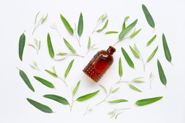 Botella de aceite esencial del eucalipto con las hojas en blanco.