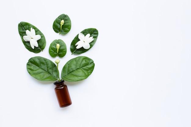 Botella de aceite esencial con la flor y las hojas del jazmín en blanco.