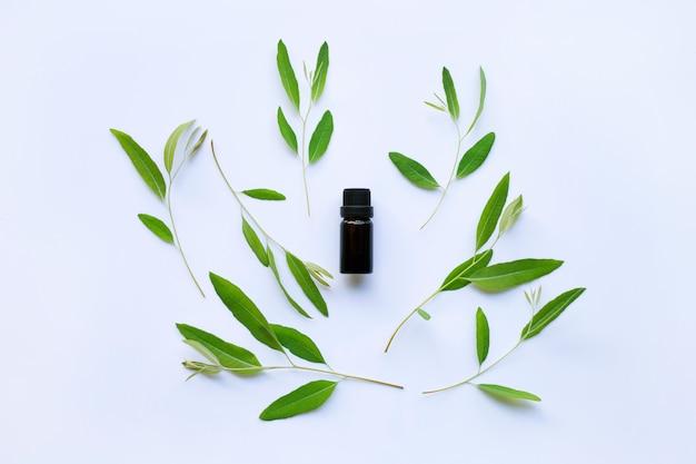 Botella de aceite del eucalipto con las hojas en el fondo blanco.