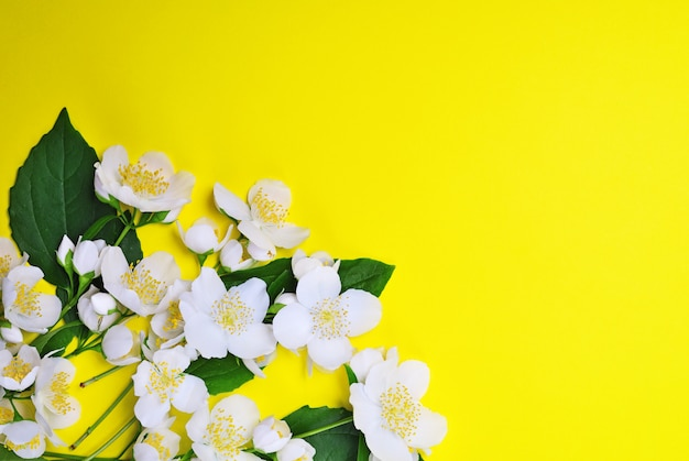 Bouquet de jazmines en flor con flores blancas.