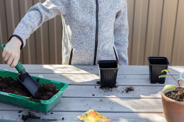 Boy pone el suelo con una pala en macetas de plántulas para plantar semillas de plantas. concepto de primavera