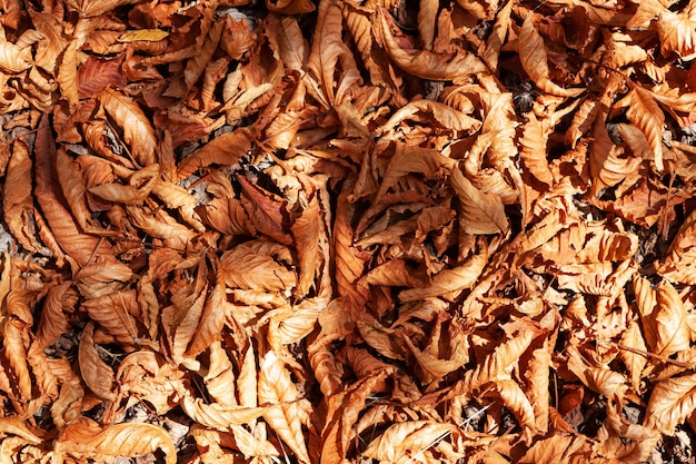 Brillante alfombra de otoño de hojas caídas follaje seco en los rayos del sol en la superficie de la tierra
