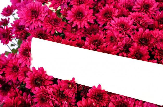 Brillante ramo de crisantemos morados con una tarjeta blanca en blanco