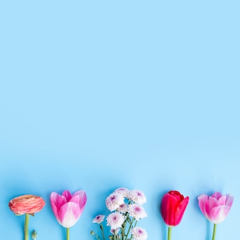 Brillantes flores frescas en fila
