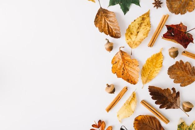 Brillantes hojas y especias en blanco