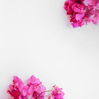 Brillantes ramas florales en blanco