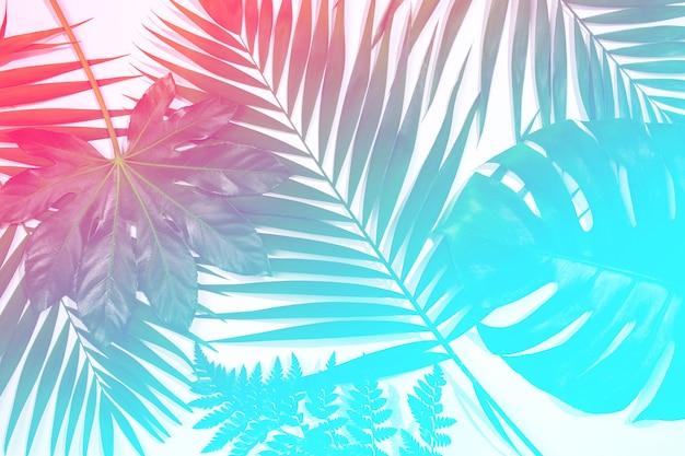 Brillo solar. hojas exóticas tropicales de verano aisladas sobre fondo blanco. diseño de tarjetas de invitación, volantes. plantillas de diseño abstracto para carteles, portadas, fondos de pantalla con copyspace para texto.