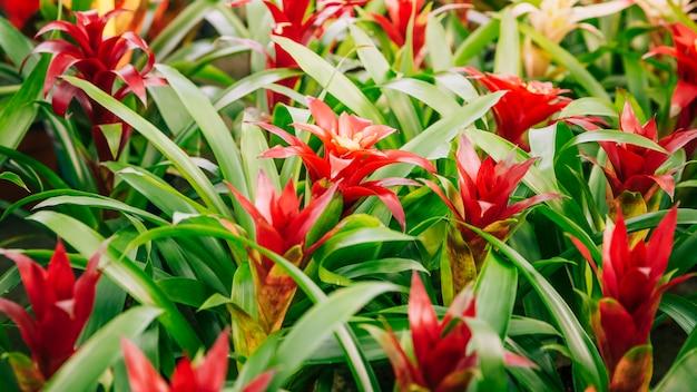 Bromelia roja bromelia flor floreciente planta