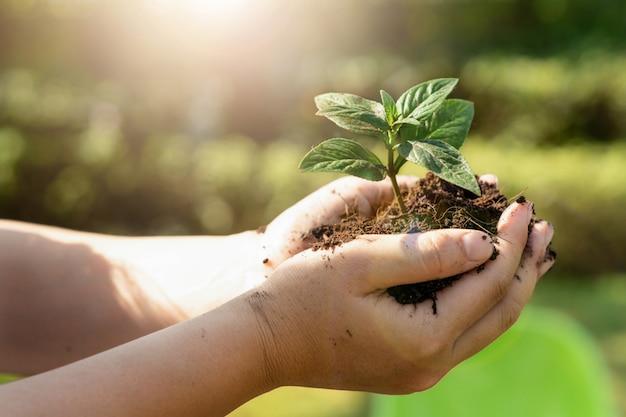 Brote de árbol de planta joven en mano de mujer.