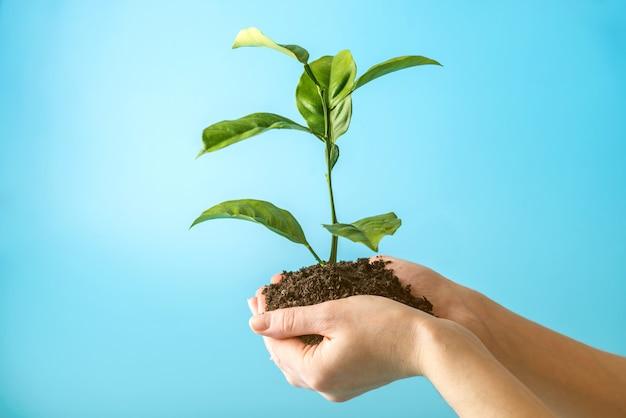 Brote del nuevo árbol verde en el suelo en manos humanas