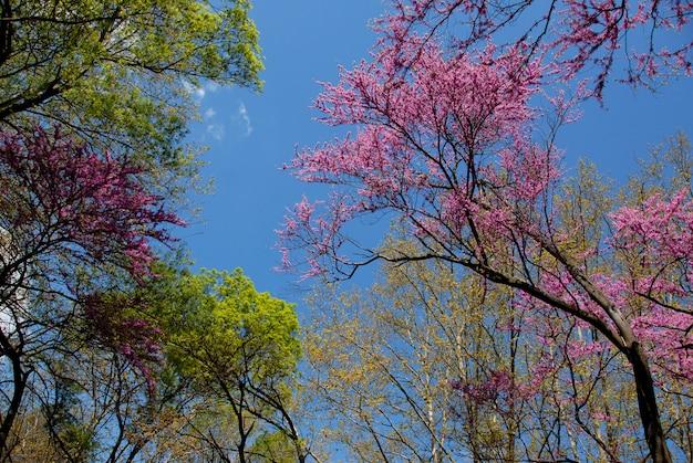 Brote rojo en primavera