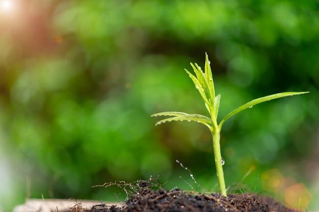 El brote verde de la planta de semillero está creciendo en el suelo en bokeh verde