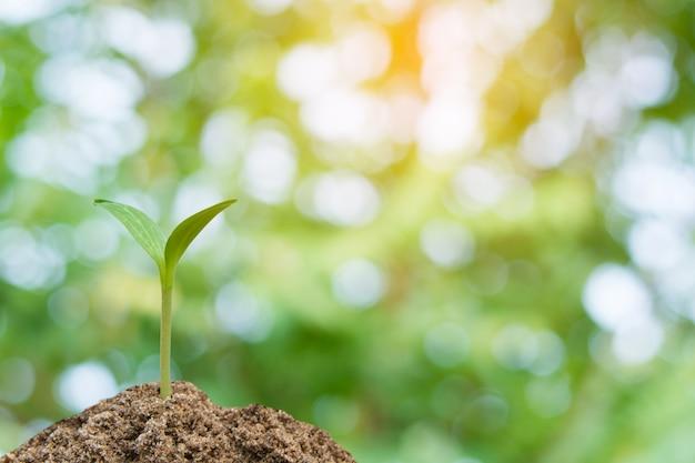 Brote verde que crece, planta joven de suelo con luz solar y fondo de naturaleza de desenfoque verde