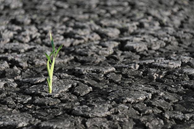 Brote verde solitario en tierra seca y agrietada