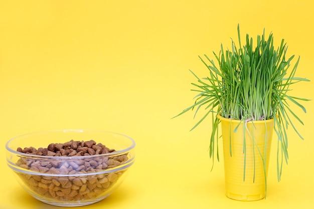 Brotes de avena verde y un plato de comida seca para gatos. fondo amarillo. hierba verde en la dieta de los gatos. dieta para gatos, nutrición adecuada de las mascotas.