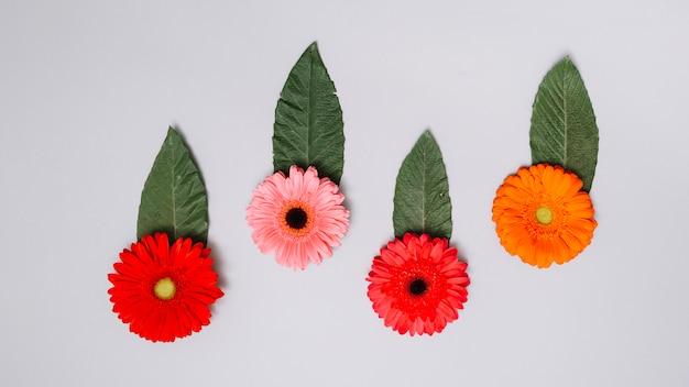 Brotes de flores brillantes con hojas en mesa blanca