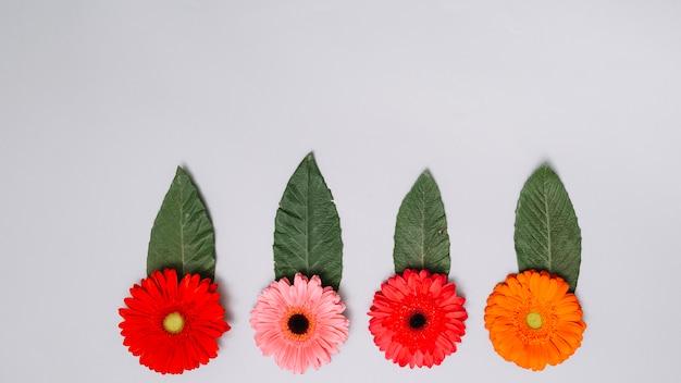 Brotes de flores brillantes con hojas en la mesa