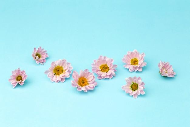 Brotes de flores de color rosa con pétalos de rosa sobre un fondo mínimo de color. concepto de fondo floral