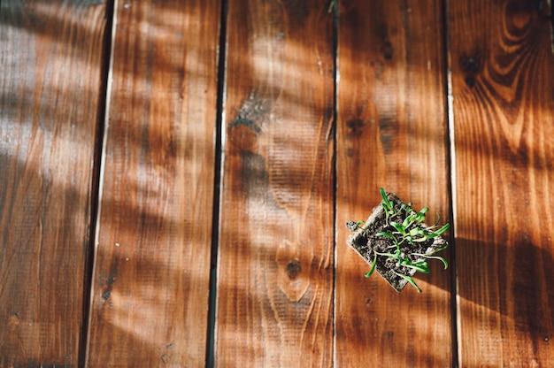 Brotes frescos, planta en maceta biodegradable. eco jardinería en casa