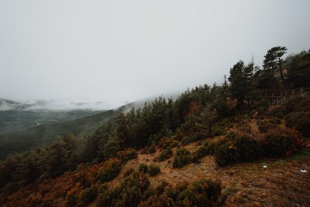 Brumosa mañana en un bosque de otoño