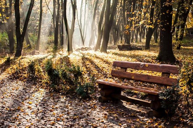 Brumosa mañana otoñal en el parque, banco