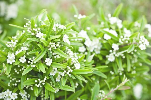 Brunch floreciente con flores blancas.