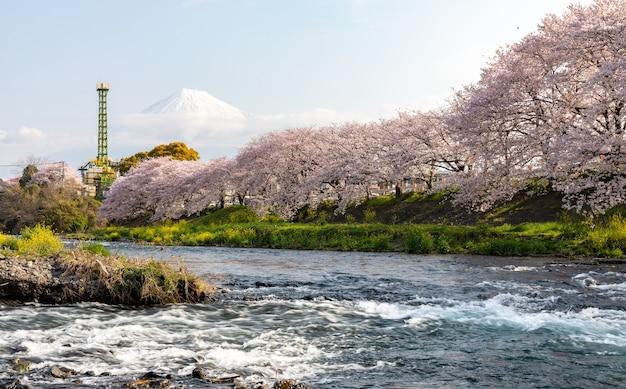 Buena vista hito ryuganbuchi sakura y fondo fuji