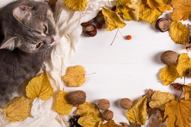 Bufanda, castañas, nueces y hojas secas y un gato en una mesa de madera. fondo de calentamiento otoñal, copyspace.