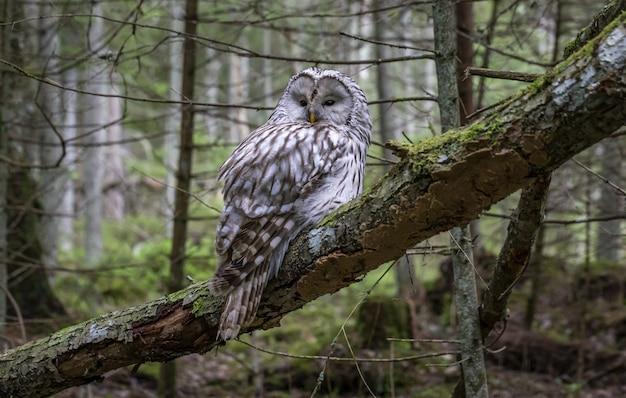 Búho sentado en la rama de un árbol en el bosque