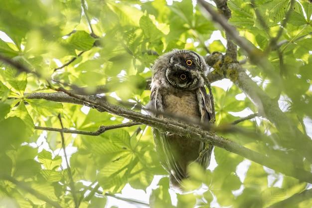Búho sentado en la rama y mirando a la cámara