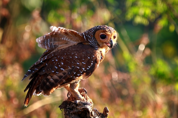 Los búhos capturan presas para pollos pequeños, primer plano de animales, búhos en caza en madera