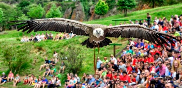 Un buitre volando sobre las cabezas.