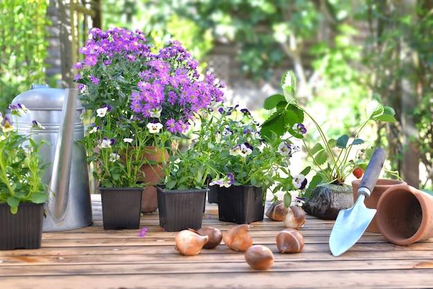 Bulbos de flores en una mesa de jardín delante de equipos de jardinería y macetas de flores en la mesa de madera en un jardín.