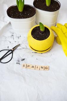 Bulbos de jacinto trasplantados en macetas nuevas, en el contexto de herramientas de jardinería, guantes amarillos. letras de primavera.