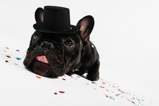 Bulldog adorable posando con elementos de fiesta