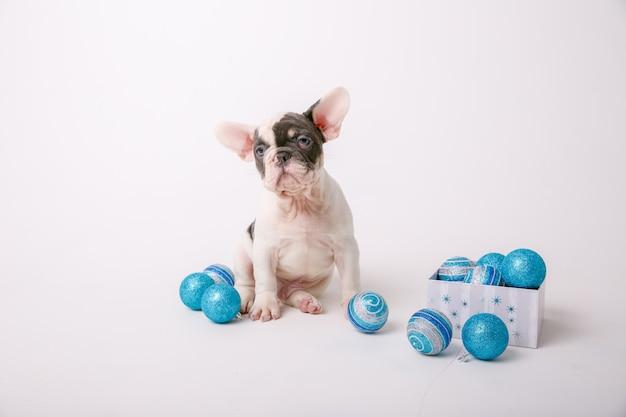 Bulldog francés cachorro decoración de navidad aislado sobre fondo blanco.