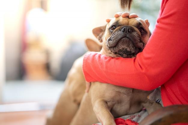 Bulldog francés en el regazo de la mujer de interior.
